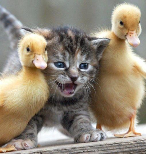 foto hewan lucu