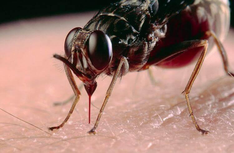 Cara Mengusir Lalat Secara Alami